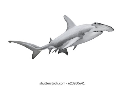 The Great Hammerhead Shark - Sphyrna mokarran is dangerous predatory fish. Sea life isolated on white background. Animal 3D illustration.
