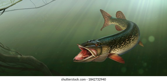 Great northern pike on the hunt illustration art. Grass pickerel under water in attack background of water.