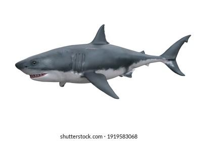 Great White Shark. 3D render isolated on white.