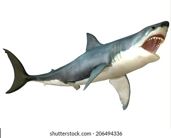 Great White Shark Attack - The Great White Shark is an apex-predator and is found throughout the world's seas.