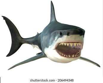 Great White Shark Mouth - The Great White Shark is an apex-predator and has several sets of teeth which replace themselves continuously.
