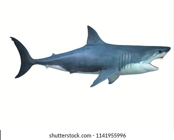 Great White Shark Side Profile 3D illustration - The Great White shark is a large carnivore found in all ocean environments and can live to 70 years old.