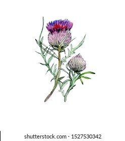 Greater burdock watercolor illustration isolated on white background