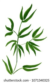 Green Bamboo, painted in watercolor in oriental style. Hand drawn sketch of watercolor bamboo. Watercolor bamboo on the textured paper. Element for design.