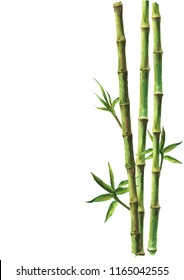 Green bamboo stems and leaves isolated on white background. Watercolor hand drawn botanical illustration with space for text. Watercolour card background.