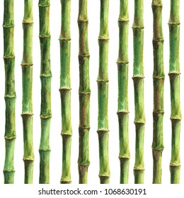 Green bamboo stems seamless pattern on white background. Watercolor hand drawn botanical illustration. Print for textile, wallpaper, wrapping