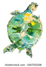 Green, blue, and yellow sea turtle swimming underwater on white background, viewed from above.