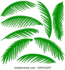 green branches of palm trees isolated on white background