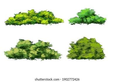 Green bush plant  Illustration isolated on white background.