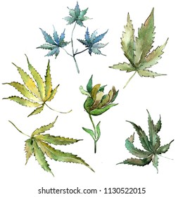 Green cannabis leaves in a watercolor style isolated. Aquarelle leaf for background, texture, wrapper pattern, frame or border.
