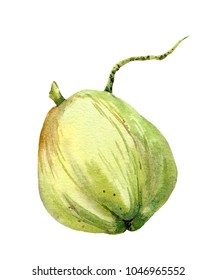 Green coconut, tropical fruit. Watercolor