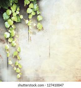 green creeper (vine grape) leaves on worn paper ;  vintage background