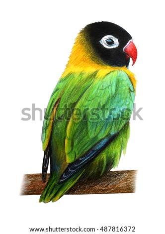 Royalty Free Stock Illustration Of Green Cute Love Bird Drawing