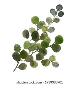 green eucalyptus branch painted with watercolor on a white background isolated