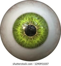 green eye pupil iris eyeball