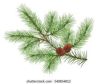 Green fluffy cedar branch and two cones. Isolated on white illustration