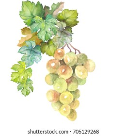 green grape with leaves.watercolor