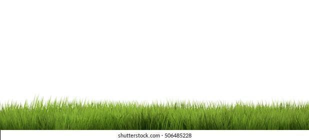 green grass. green grass background