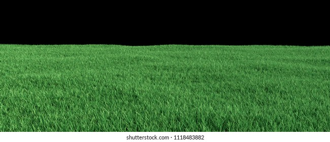 Green Grass Banner 3D Rendering with Copy Space and Infinite Depth of Field