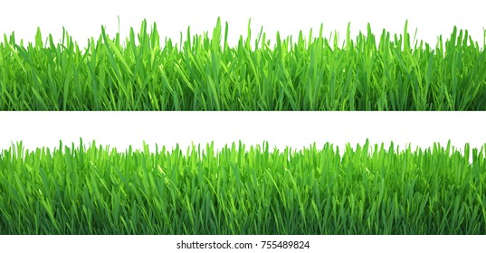 Green grass banners set. Nature background. Meadow. Spring, summer season. Plant growth 3d rendering