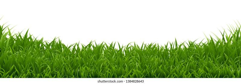 Green Grass Border On White