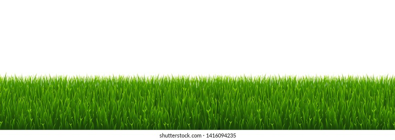 Green Grass Border With White Background