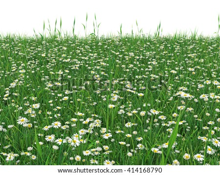 Grass Field With Flowers In Green Grass Field With Daisy Flowers Chamomile Flowers In The Lawn Surrounded Isolated On Grass Field Daisy Flowers Stock Illustration