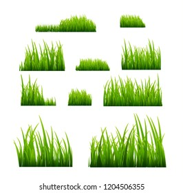 Green grass illustration isolated. Summer natural grassy green plant for garden. Grass template.