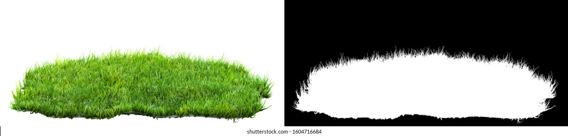 green grass isolated on white background with alpha mask for easy isolation 3D illustration