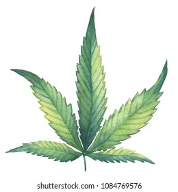 A green leaf of Cannabis sativa (Cannabis indica, Marijuana) medicinal plant. Watercolor hand drawn painting illustration isolated on a white background.