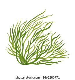 Green leaf,Green Seaweed, kelp, Algae in the ocean, watercolor hand painted element isolated on  white background. Watercolor seaweed,green leaves illustration design. With clipping path.