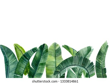 green leaves of banana palm trees on an isolated white background, watercolor illustration, leaves of tropical trees, greeting card with space for text, invitation, greeting card