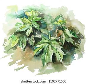 Green leaves watercolor sketch