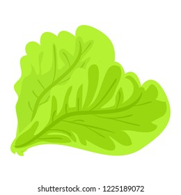 Green lettuce leaf icon. Cartoon of green lettuce leaf icon for web design isolated on white background