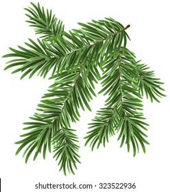 Green lush spruce branch. Fir branches. Isolated illustration