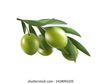 Green olive branch isolated on white background as package design composition. Photo-realistic , 3d