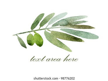 Green olives branch with a field for the text