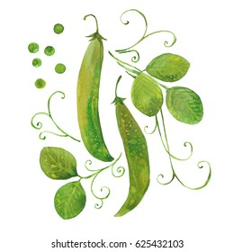 Green  pea, watercolor illustration  on white background