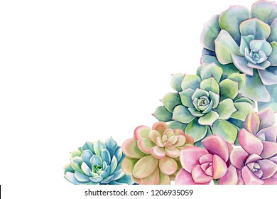 Green plant. Echeveria,succulent on an isolated white background, watercolor illustration, botanical painting, hand drawing. Postcard with place for text
