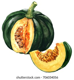 Green pumpkin with slice, autumn vegetable isolated, watercolor illustration on white