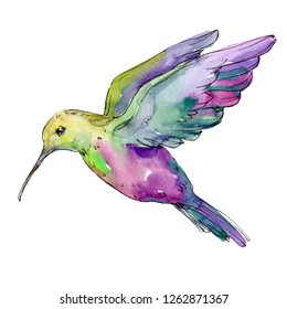 Green purple colibri in a wildlife. Wild freedom, bird with a flying wings. Watercolor background illustration set. Watercolour drawing fashion aquarelle. Isolated hummingbird illustration element.