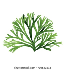 Green Seaweed, kelp,coral in the ocean, watercolor hand painted green seaweed element isolated on white background. Watercolor illustration design. With clipping path.