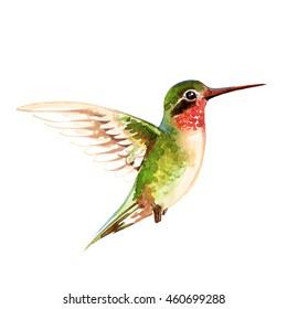 Green small glossy colibri, watercolor illustration