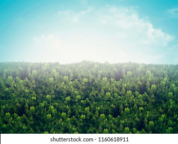 Green tree, beautiful bird eye view on fresh tree in the morning sun light,  forest background, blur illustration.