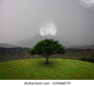 Green tree in the field. Full moon above mountain landscape. Galaxy is visible in the sky. 3D rendering