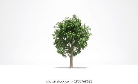 Green tree growth on white Nature spring season 3d render