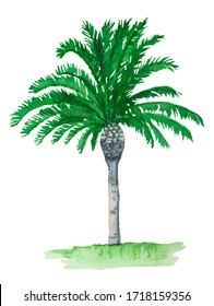 Green tree palms watercolor illustration isolated on white background.
