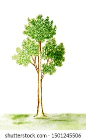Green tree pencil drawing on white background.