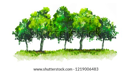 Green trees watercolor illustration. Hand drawn garden, beautiful spring forest isolated on white for your design.