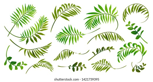 Green tropic leaves raster set isolated on white background.